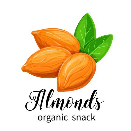 Vector almond nuts