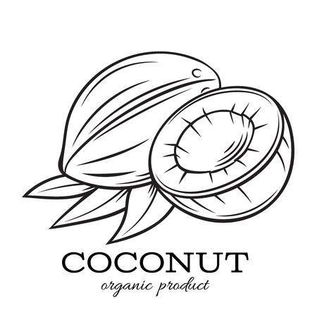 Hand drawn coconut icon. Ilustrace