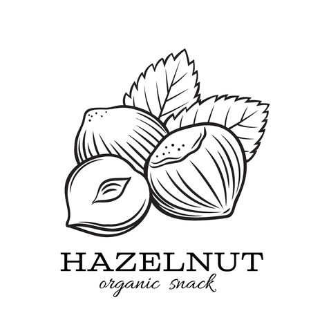 hand drawn hazelnut