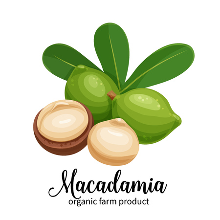 macadamia nuts in cartoon style