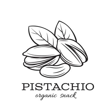 hand drawn pistachio nuts Ilustrace