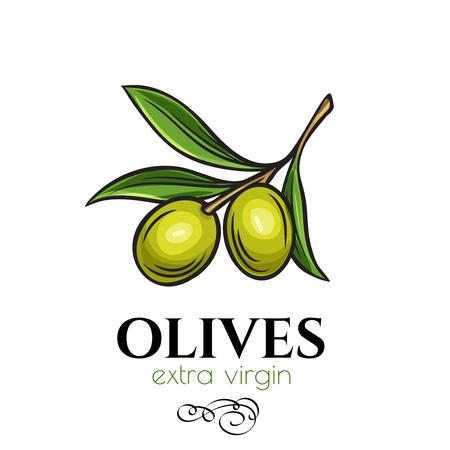 Hand drawn olives icon badge.