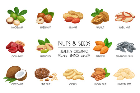 Set vector icons nuts and seeds. Cola nut, pumpkin seed, peanut and sunflower seeds. Pistachio, cashew, coconut, hazelnut and macadamia. Illustration in cartoon style.