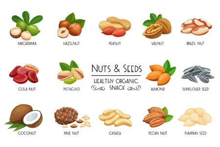 Stellen Sie Vektorikonen Nüsse und Samen ein. Colanuss-, Kürbiskern-, Erdnuss- und Sonnenblumensamen. Pistazien, Cashewnüsse, Kokosnuss, Haselnüsse und Macadamia. Abbildung im Cartoon-Stil.