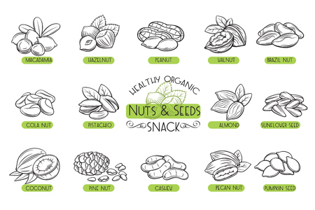 Set vector icons nuts and seeds. Imagens