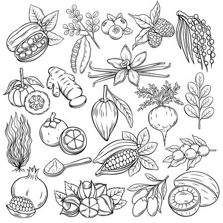 Set hand drawn superfood icons. Illustration