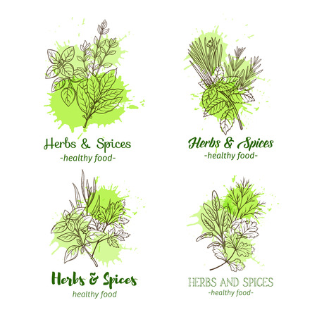 Hand drawn sketch of herbs and spices