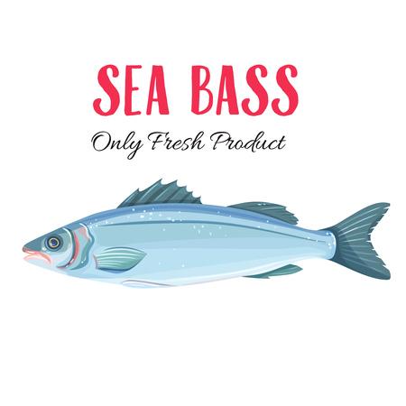Vector Sea Bass. Illustration