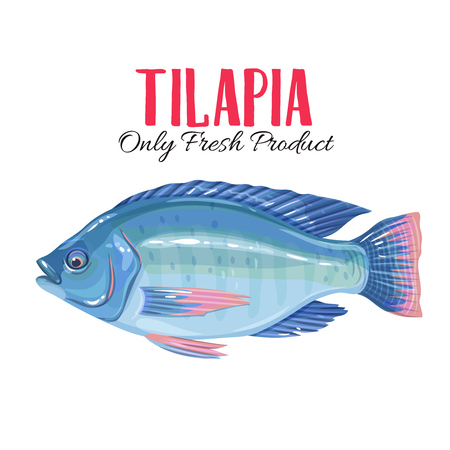 Vector tilapia Illustration