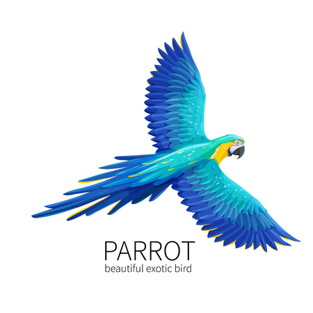 Vector parrot bird
