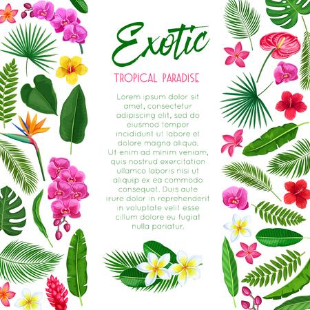 Affiche tropicale de vecteur. Conception de page de modèle de paradis exotique avec Monstera de feuilles exotiques de la jungle, palmier d'arec, fougère royale et plumeria. Strelitzia, anthurium, hibiscus, orchidée et fleur de gingembre. Vecteurs