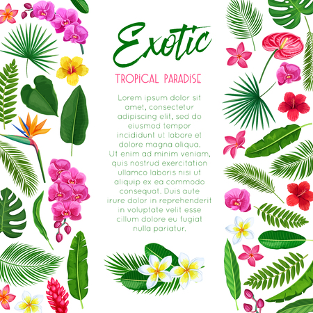 Vector tropical poster. Exotic paradise template page design with Jungle exotic leaf monstera, areca palm, royal fern and plumeria. Strelitzia, anthurium, hibiscus, orchid and ginger flower.