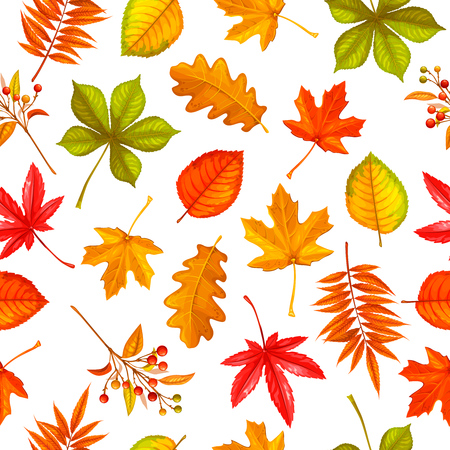 Seamless pattern with autumn leaves maple, oak, elm, chestnut or Japanese maple, rhus typhina and autumn berries. vector illustration.