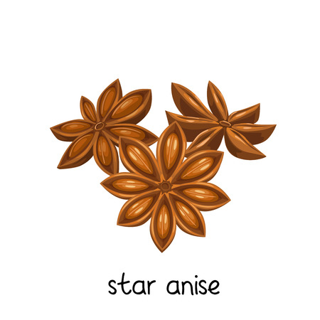Vector star anise. Illustration spice for design product.