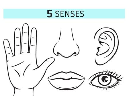 Cinco sentidos humanos, iconos vectoriales. Ilustración de contorno de labios, orejas, nariz, ojos y manos