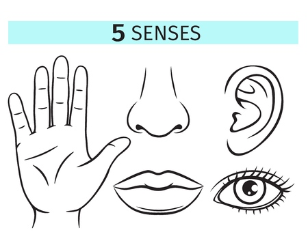 Five human senses, vector icons. Outline illustration of lip, ear, nose, eye and hand