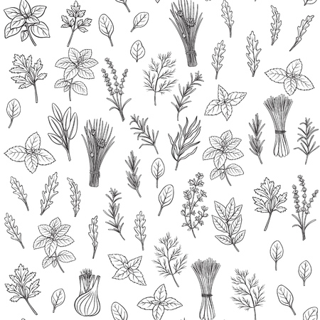 Culinary herbs and spice seamless pattern. Engraved seasoning. Vector illustration. Bay leaf, lemongrass, fennel, dill, cilantro and chives. Thyme, lemon balm, tarragon etc Seasoning design Foto de archivo - 126945093