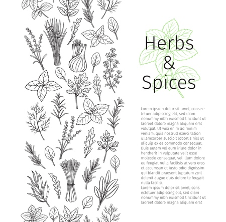 Culinary herbs and spice seamless border. Bay leaf, lemongrass, fennel, dill, cilantro and chives. Thyme, lemon balm, tarragon etc. Seasoning food page design. Vector illustration. Ilustração