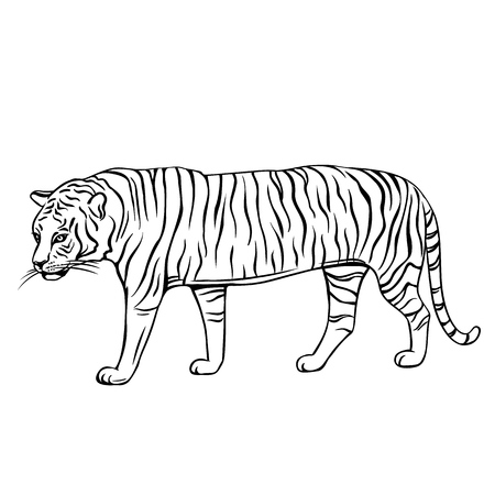Hand drawn tiger icon. Engraved vector illustration of zoo animal Vectores