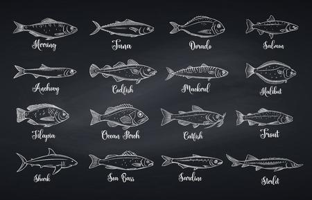 Poisson de contour. Fruits de mer gravés avec daurade, maquereau, thon ou sterlet, poisson-chat, morue et flétan. Tilapia d'icône linéaire, perche de mer, sardine, anchois, bar et dorado. Style de tableau, illustration vectorielle Vecteurs