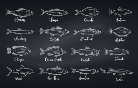 Outline fish. Engraved seafood with bream, mackerel, tuna or sterlet, catfish, codfish and halibut. Linear icon tilapia, ocean perch, sardine, anchovy, sea bass and dorado. Chalkboard style, vector illustration Illustration