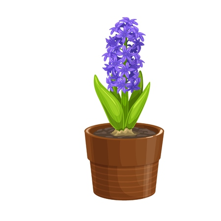 Hyacinth icon in cartoon style. Garden flower