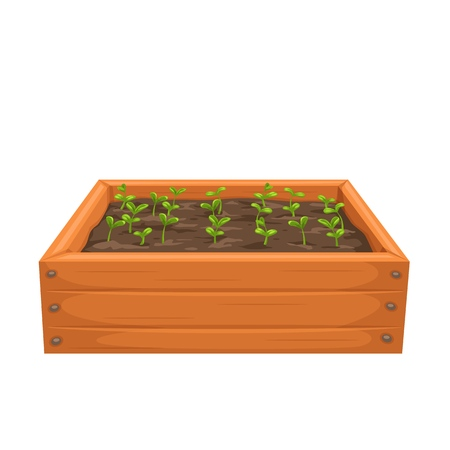 Sprouts, shoot, seedling, sapling in a wooden box . Garnening illustration. 矢量图像