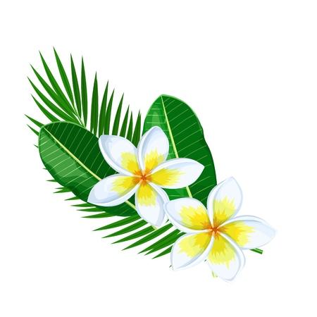 Plumeria, summer tropical flower. Cartoon style vector illustration. Exotic hawaiian element. Vector illustration.