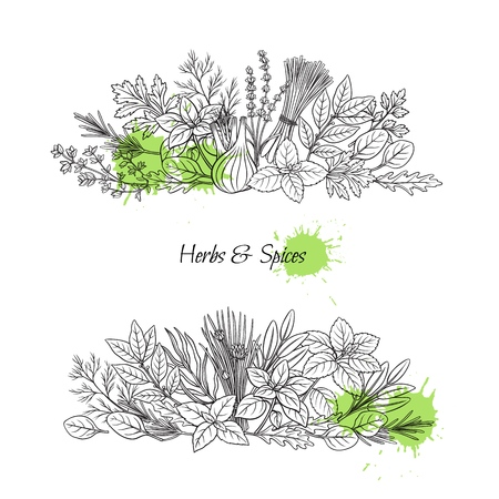 Culinary herbs and spice banners. Bay leaf, lemongrass, fennel, dill, cilantro and chives. Thyme, lemon balm, tarragon etc. Seasoning design. Retro vector illustration