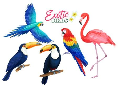 Aves exóticas. Loro, flamenco y tucán. Ilustración de dibujos animados para el diseño de vacaciones de publicidad de paraíso tropical de verano.