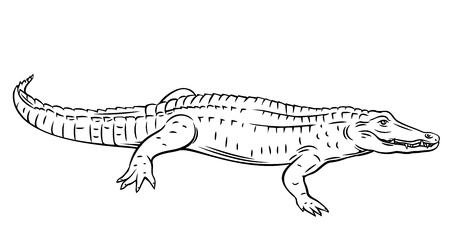 Crocodile, outline vector. Alligator illustration animal for zoo design. Hand drawn style