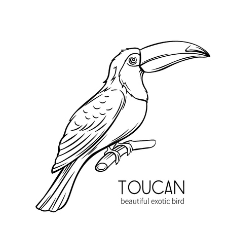 Toucan, exotic tropical bird sitting on branch. Hand drawn illustration for summer tropical paradise advertising vacation design. Standard-Bild - 124518286