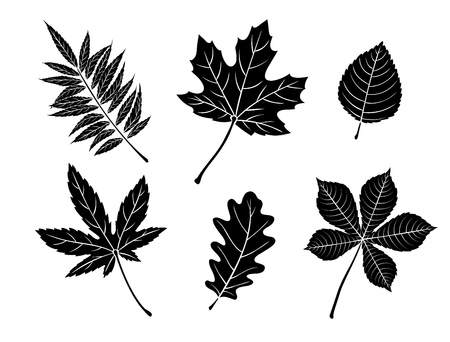 Black fall leaves silhouettes. Autumn leaves maple, oak, elm, chestnut, Japanese maple and rhus typhina. Vector illustration.