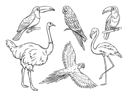 Exotic birds, hand drawn outline. Parrot, flamingo, ostrich and toucan. Cartoon iluustration for summer tropical paradise advertising vacation design. Retro style. Ilustração