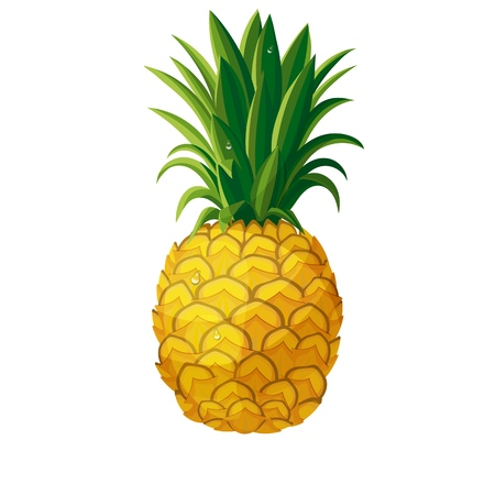 Ananas de vecteur. Illustration ananas fruits frais tropicaux en style cartoon Vecteurs