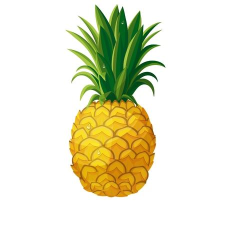 Vektor-Ananas. Illustration Ananas tropische frische Früchte im Cartoon-Stil Vektorgrafik