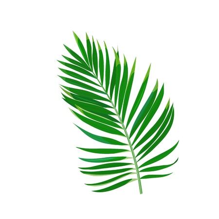 Tropical palm leaf. Jungle exotic leaves. Vector illustration Standard-Bild - 124518329