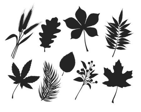 Fall leaves silhouettes