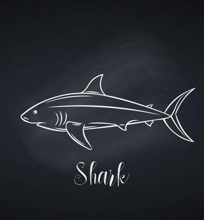 Vector shark chalk icon, blackboard