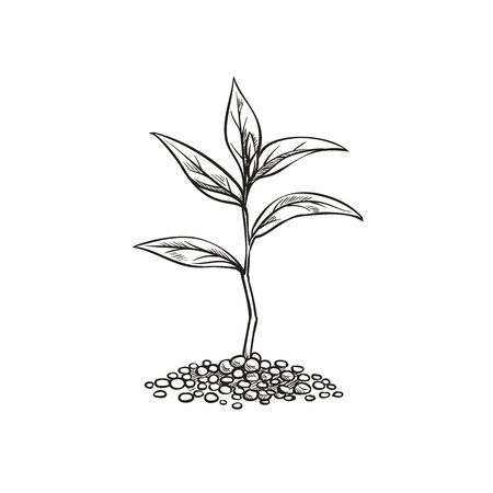 Vintage sprout in sketch style. Çizim