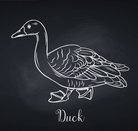 Duck outline icon, chalkboard style.