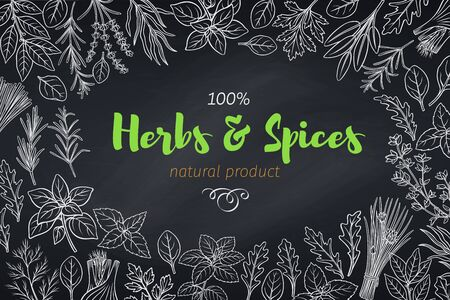 Culinary herbs and spice template, chalkboard style. Vector illustration seasoning food page design Bay leaf, lemongrass, fennel, dill, cilantro and chives. Thyme, lemon balm, tarragon etc.
