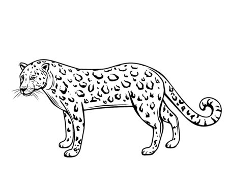 Leopard, outline animal. Panthera, puma or wild cat drawing vector illustration, isolated. Ilustração