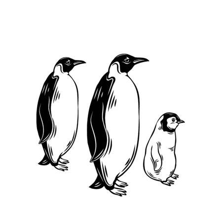 Penguin outline icons. Aquatic flightless birds for zoo design. vector illustration.