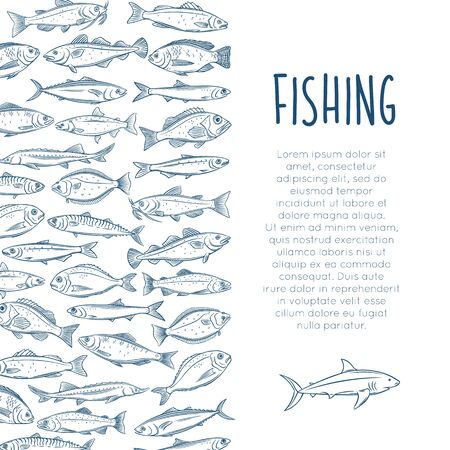 Outline fish layout with bream, mackerel, tunny or sterlet, catfish, codfish and halibut. Icon tilapia, ocean perch, sardine, anchovy, sea bass and dorado. Vector illustration.