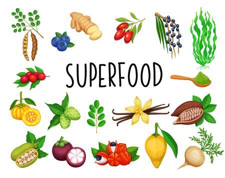 Superfood fruit and leafy greens. Berries and vegetables. Healthy detox natural product of camu camu, garcinia cambogia and maca. Vector carob, ginger, moringa, lucuma, coji berries, mangosteen, acai. Illustration