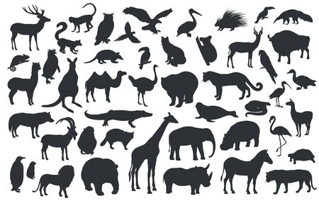 Silhouettes of traditional animals zoo. Bear, giraffe, panda, tiger, lion, camel and other wild animals and birds. Vector illustration.