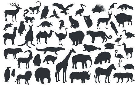 Siluetas del zoológico de animales tradicionales. Oso, jirafa, panda, tigre, león, camello y otros animales salvajes y aves. Ilustración de vector.