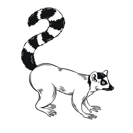 Lemur icon. Madagascar animal outline badge. Vector illustration for zoo design.