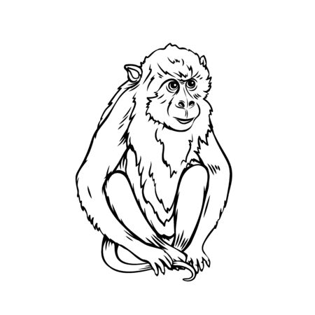 Monkey icon. Jungle macaque outline badge. Zoo animal. Vector illustration. Illustration